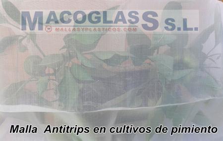 Malla antitrips en cultivos de pimiento