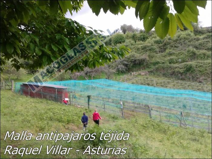 Malla antipájaros tejida en Asturias