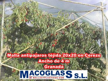 Malla antipájaros tejida 20 x 20 en cerezo en Granada