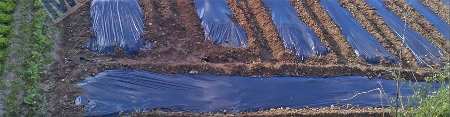 Plásticos acolchados cultivos