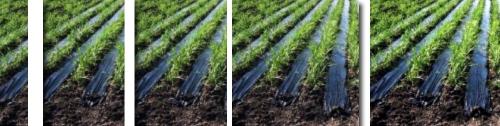 plásticos para acolchado agrícola