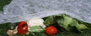 Plásticos térmicos verdura