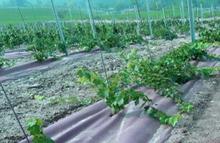 geotextil_plantaciones
