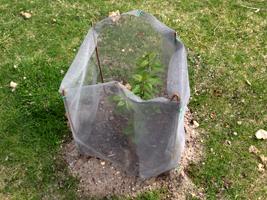 malla mosquitera para proteger cultivos