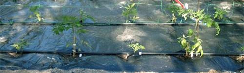 malla-soporte-plantas