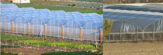 plásticos térmicos para invernadero