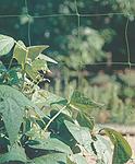 malla-soporte-plantas-horizontal