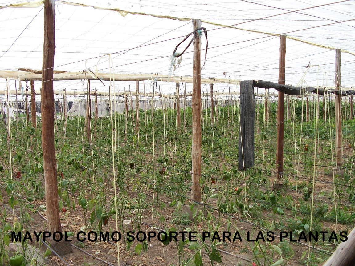 MAYPOL como soporte para las plantas