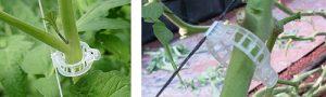 Clip para tomates - sujetar hilo de entutorado