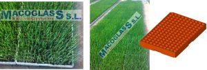 semilleros invernaderos